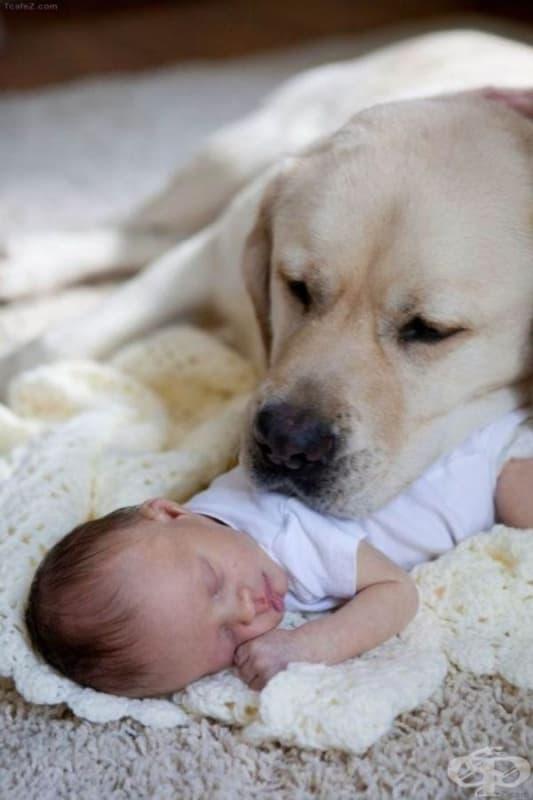 25 снимки, които показват защо децата трябва да имат домашен любимец