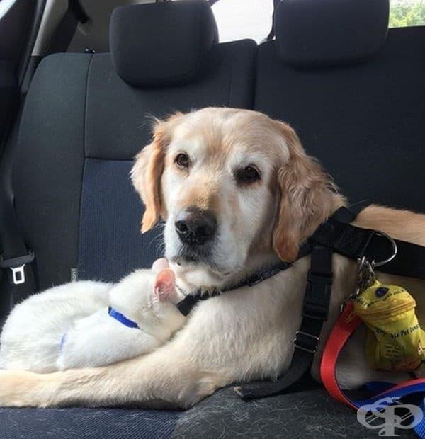 """""""Една от котките ни беше много разстроена от поставената й ваксина, че се сгуши в кучето ни по пътя към дома."""