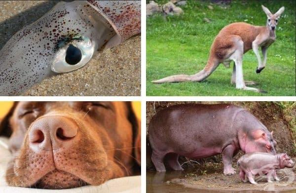 Окото на гигантски калмар е голямо колкото човешка глава.Отпечатъкът от носа на куче е уникален така както пръстовите отпечатъци при хората. Кенгуруто не може да скача, ако опашката му е на земята. Потта на хипопотама изглежда червено-кафява на кожата му.