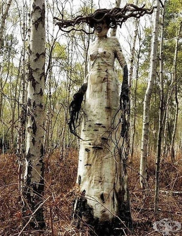 Дърво със специфична визия в гората.