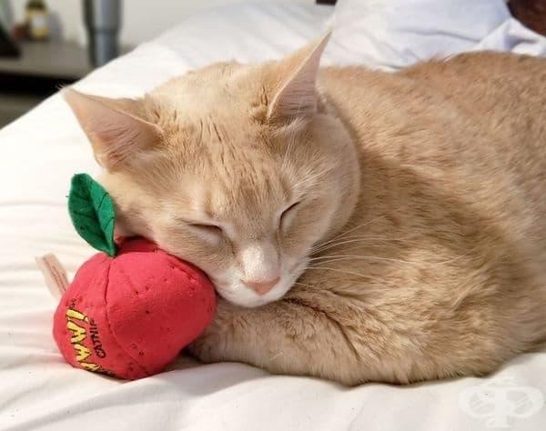 А това е любимата му играчка - топка, пълна с котешка мента.