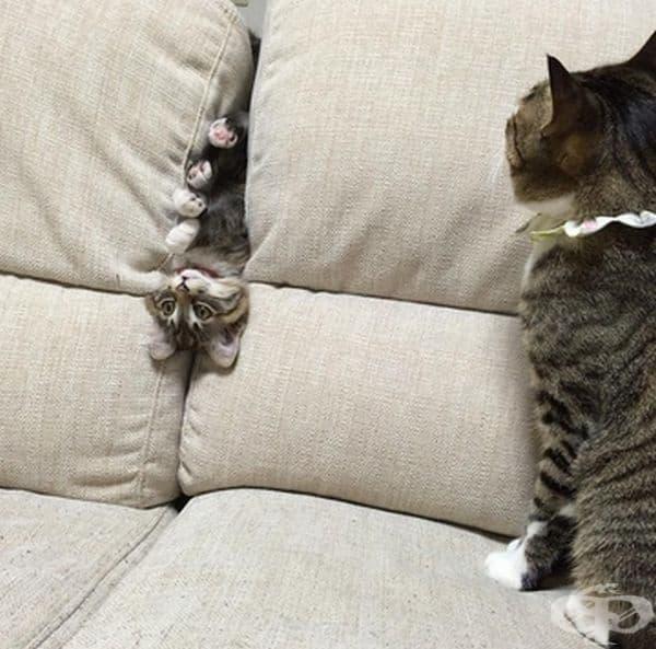"""""""Не мога да ги оставя сами и за секунда, нали?"""""""