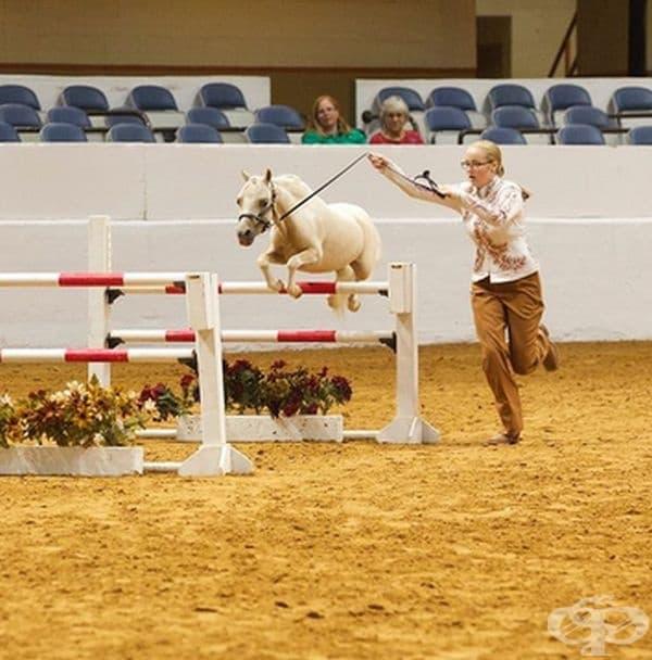 В случай, че не знаете, миниатюрни коне съществуват.