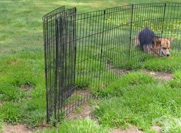 20 снимки на кучета, попаднали в неловка ситуация