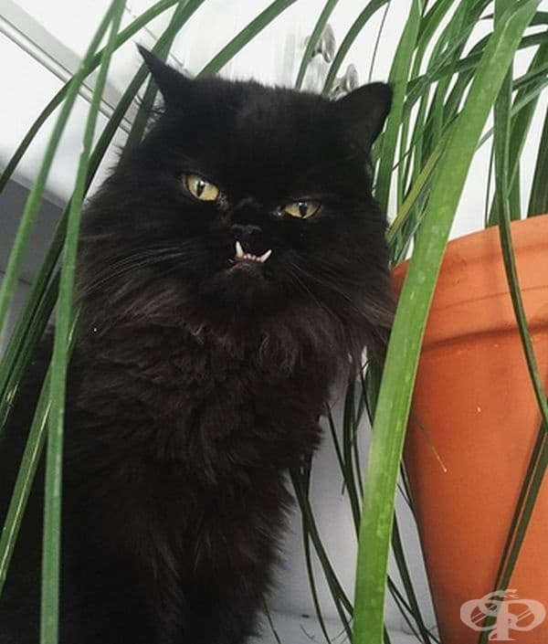 Страшна котка!