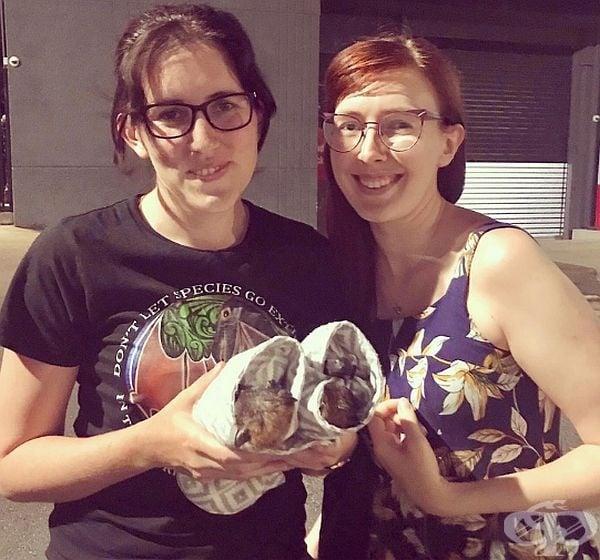 Това момиче прави обвивки за малки прилепи, за да ги предпази и спаси. В момента тя продължава да помага за спасяването на прилепи в Куинсланд.
