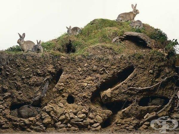 Дом на семейство зайци.