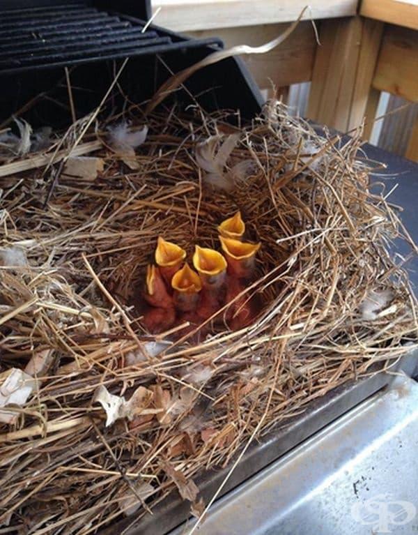 """""""Отворихме барбекюто тази пролет и открихме няколко гладни птички."""""""