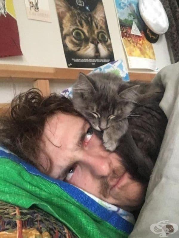 Котката буквално ще ви се качи на главата. Но вие все още ще я обичате, нали?