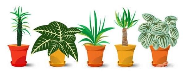 14 растения, които привличат положителната енергия в дома