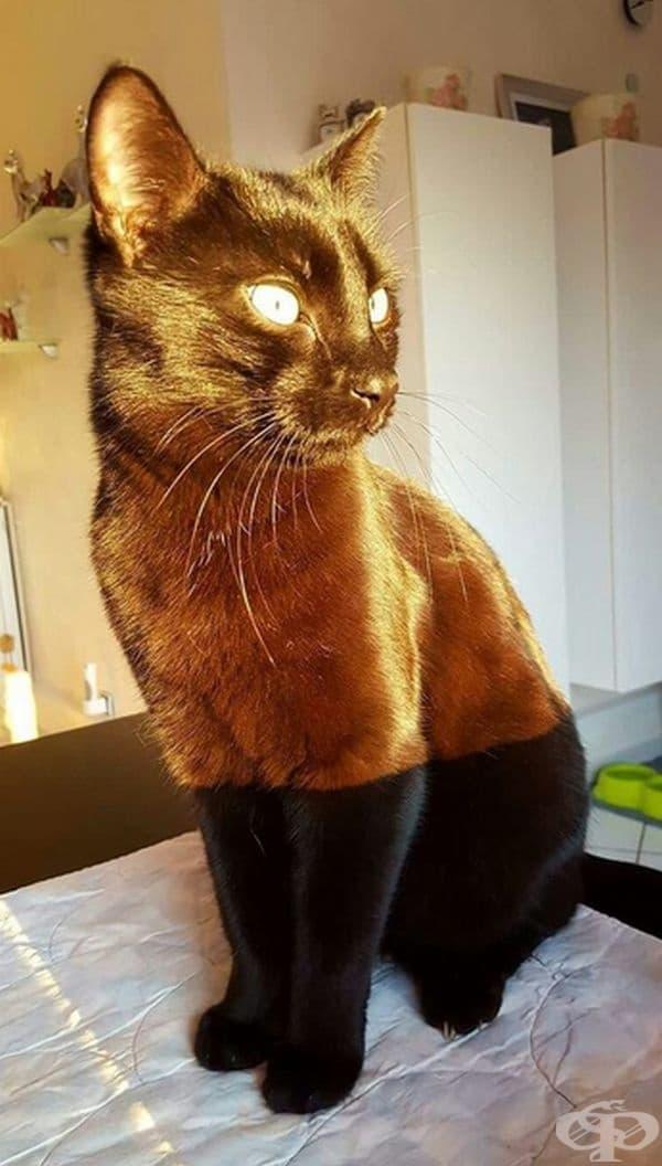 А тук слънчевата светлина е осветила идеално котката, така сякаш е с два цвята.