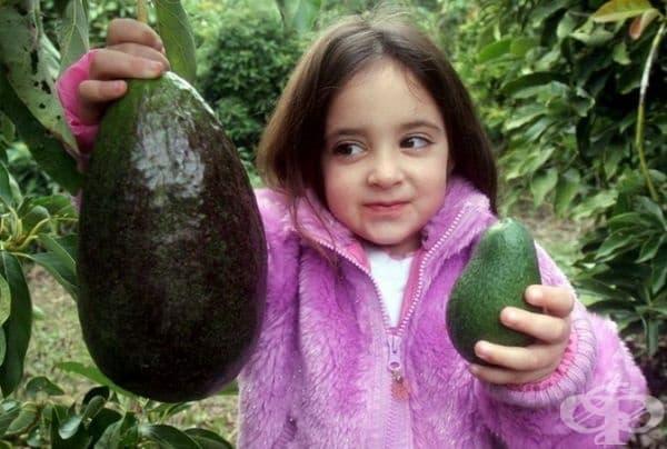 Това е авокадо от Ираел с тегло 2 кг.