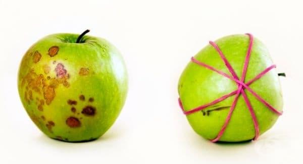 Нарязаната ябълка става жълта поради реакцията на кислорода с желязото, което изобилства в ябълките. Разрязаните парчета могат да се съединят и да се фиксират с ластици. Така кислородът няма да взаимодейства с изрязаните страни на ябълката.