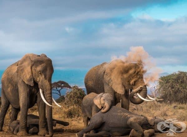 Място, където слоновете се къпят с прах.