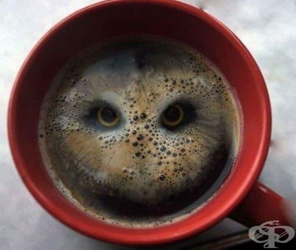 Бухал в чаша кафе.