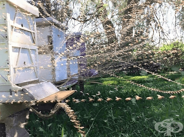 Снимка на пчелен кошер с пропусквателен режим.