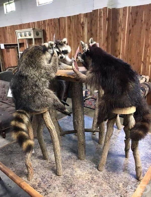 """""""3 енота играят карти. Много съжалявам, че не успях да ги купя."""""""