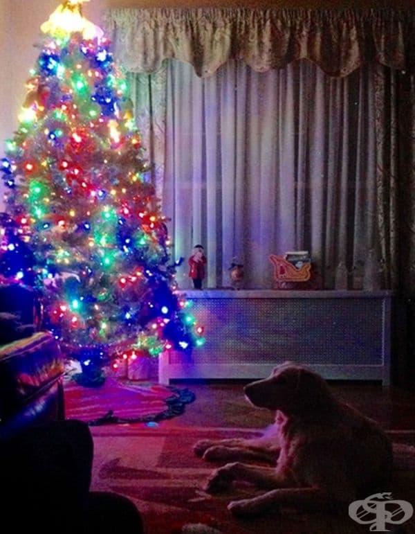 """""""Баба ми посрещна Деня на Благодарността и Коледа в един ден."""""""