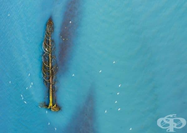 Кедрово дърво се носи по течението на река, Британска Колумбия, Канада.