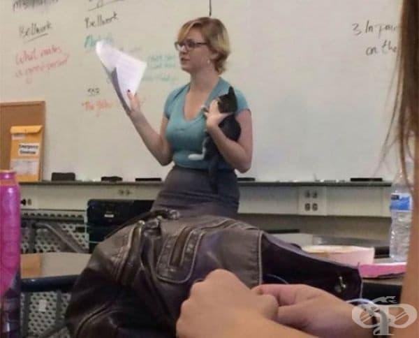 Тя преподава урока си по този начин, след като намира едно бездомно коте да се скита из училището.