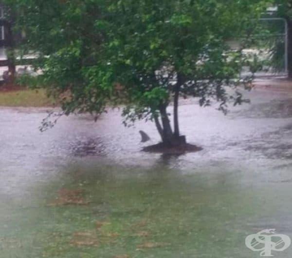 Наводнение във Флорида. Какво ли е доплувало?