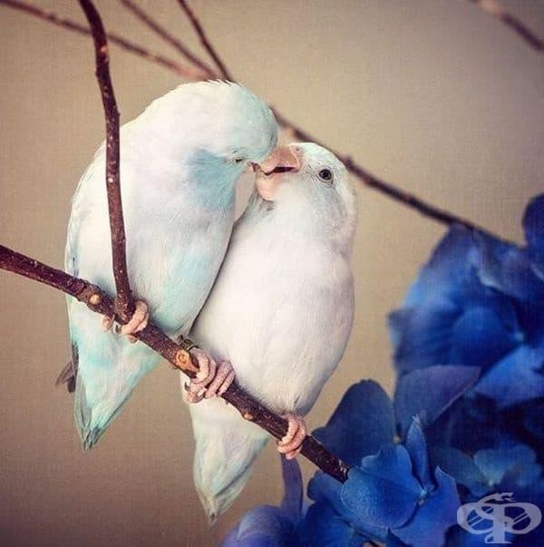 """Тези птици лесно могат да бъдат класифицирани за """"Най-красивата двойка на годината""""."""