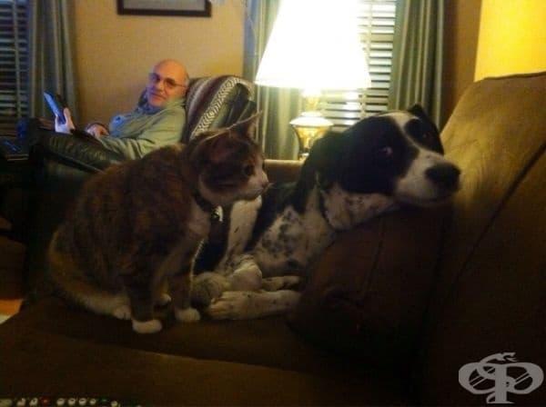 """Нашата котка тероризира кучето ни."""