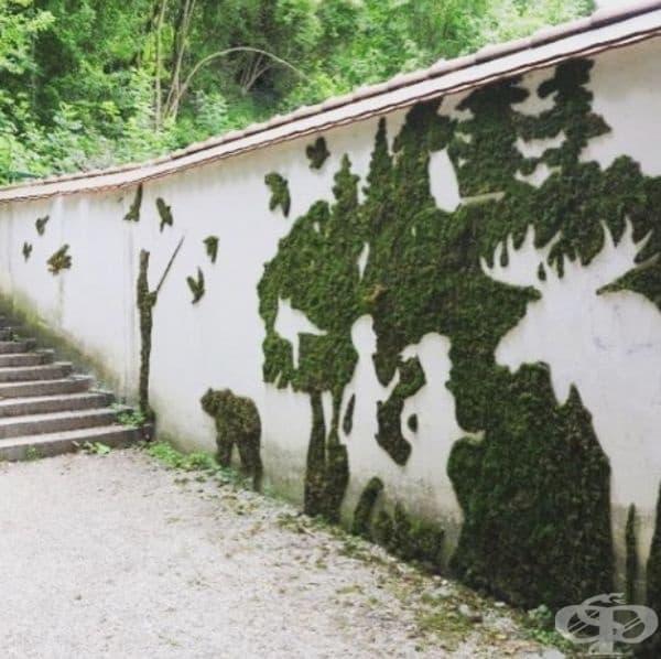 Графити от мъх.