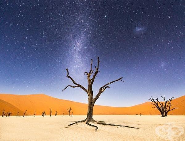 Пустинята Намиб, Африка