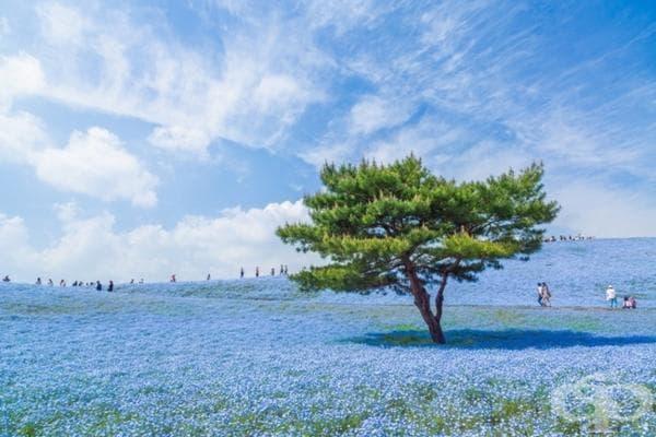 Синя вселена в Япония.
