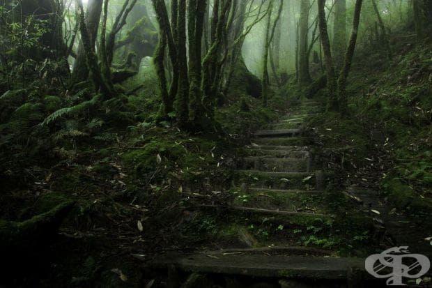Hemlock Trail, Тайван