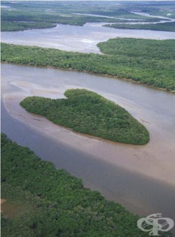 Остров в река Ваза-Барис, Бразилия