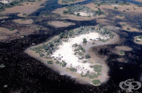 Остров с формата на сърце, река Окаванго в Ботсвана