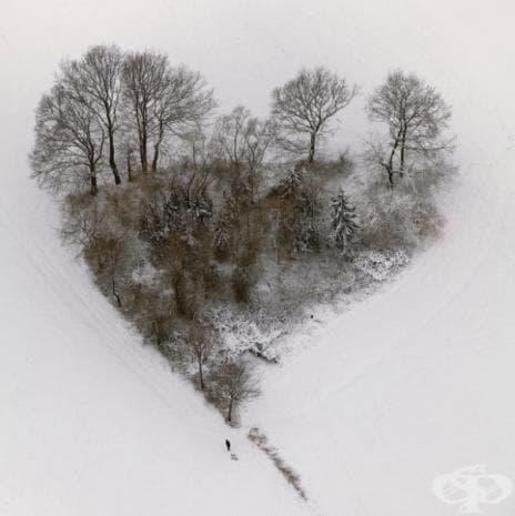 Няколко дървета, образували формата на сърце, Германия