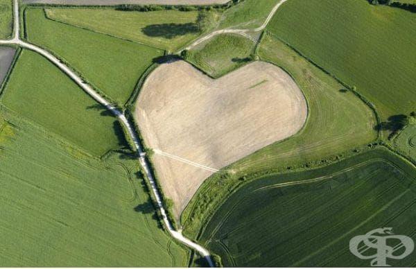 Поляна с формата на сърце, Германия