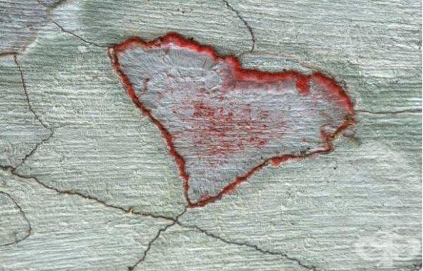 Лишей с форма на сърце, Флорида, САЩ