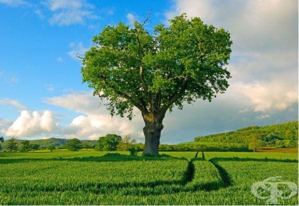 Дърво в провинция във Великобритания