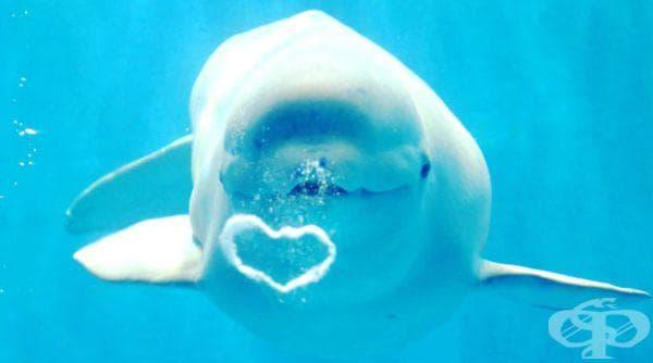 Кит издишва въздушен мехур под формата на сърце в Китай