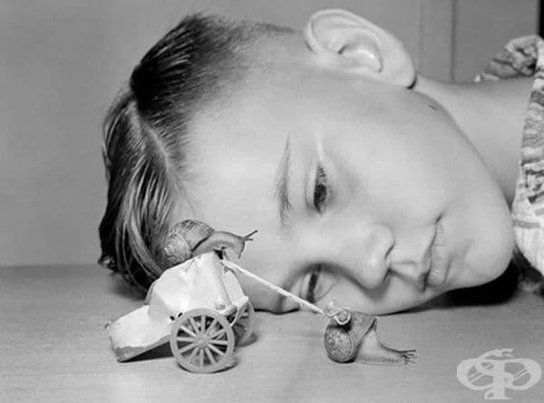10-годишно момче наблюдава два охлюва в дома си, 1954 г.