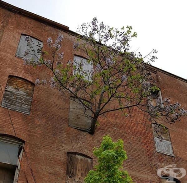 И това дърво е намерило начин да расте и цъфти.