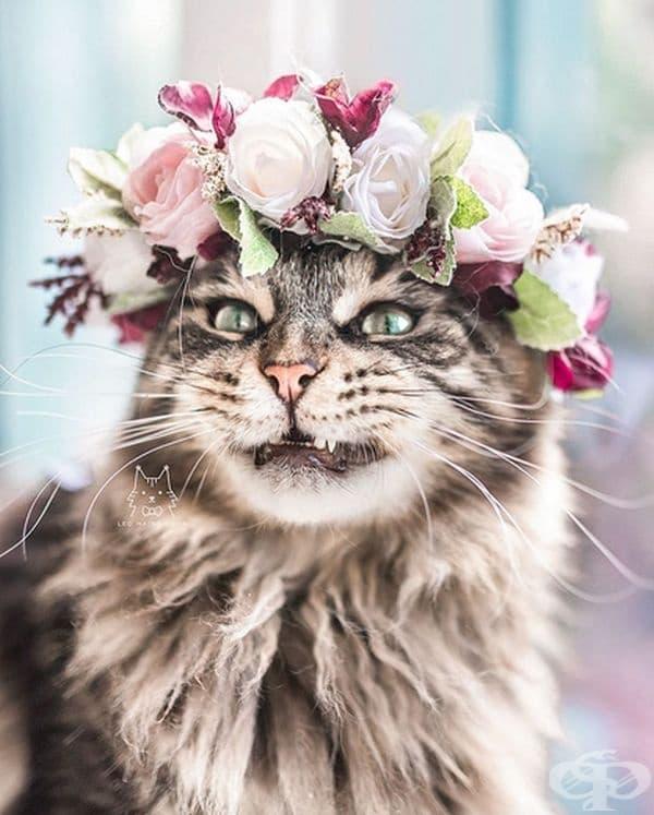 Котки и кучета с величествени корони от пъстри цветя