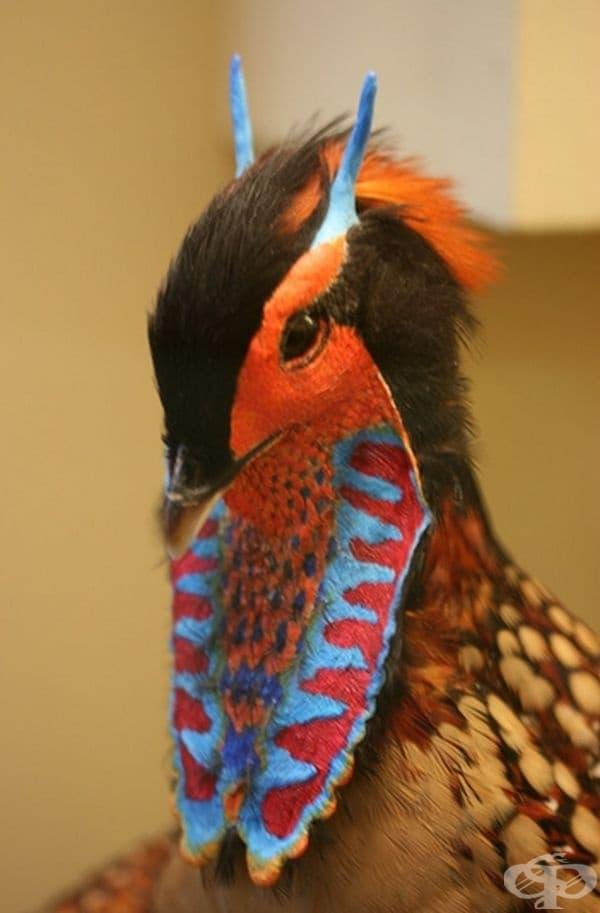 Източноазиатски фазан.