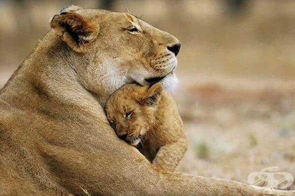 В прегръдката на мама е най-добре.