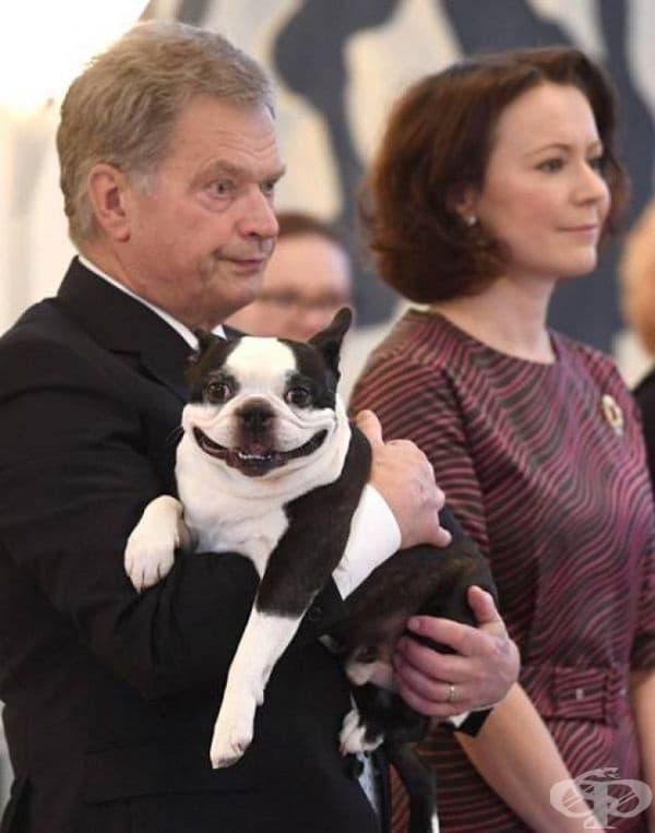 Това е Линну, кучето на финландския президент. То често отива на официални събития с него.