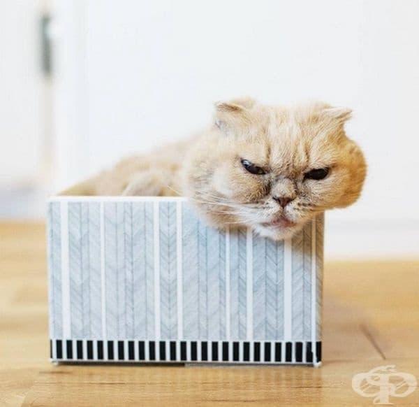 Това е Фуку. Явно и той не е в настроение в момента.
