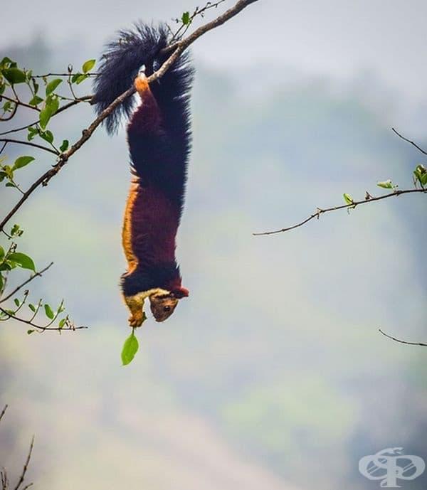 Изглежда, че това красиво и обичано животно сега получава уважението и защитата, която заслужава в Индия.