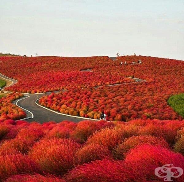 Национален парк Хитачи, Япония