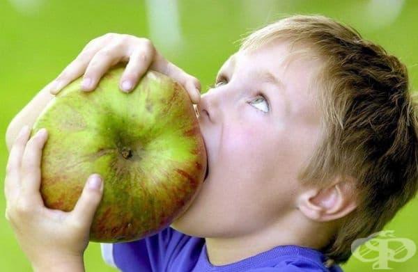 Гиганска ябълка от сорта Brumley, открита в една от градините на семейството на това дете.