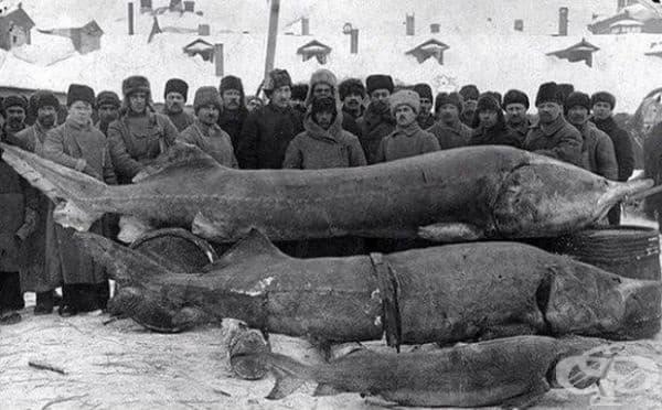 """""""Успешен риболов"""", СССР, 1924г."""
