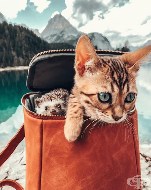 Талита споделя кадри и на други животни в профила като красивата бенгалска котка Одри.